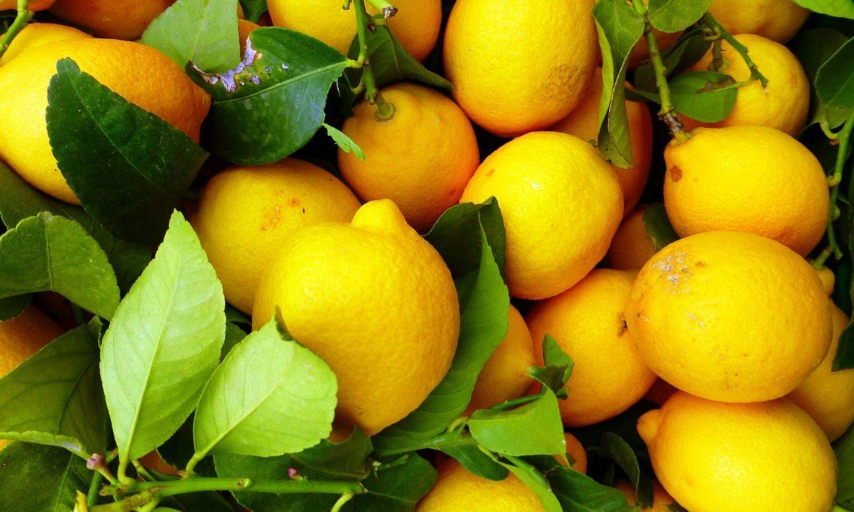 8 Manfaat Lemon Untuk Kesehatan Yang Wajib Diketahui